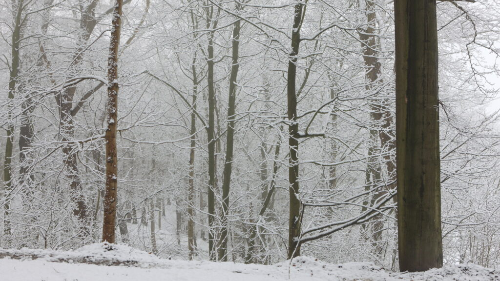Sneeuwval in Heuvelland leidt tot feeërieke taferelen op de Kemmelberg. Een waar paradijs voor wandelaars en fotografen.